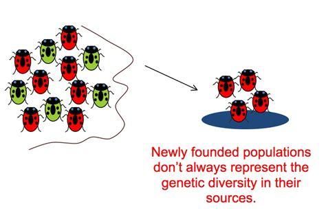 bottlenecks and founder effects