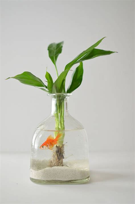 how to make a swag l diy how to make a hanging aquarium out of recycled patron