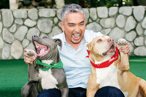 cesar millan pomeranian whisperer cesar millan shares tips on dealing with dogs mumbai