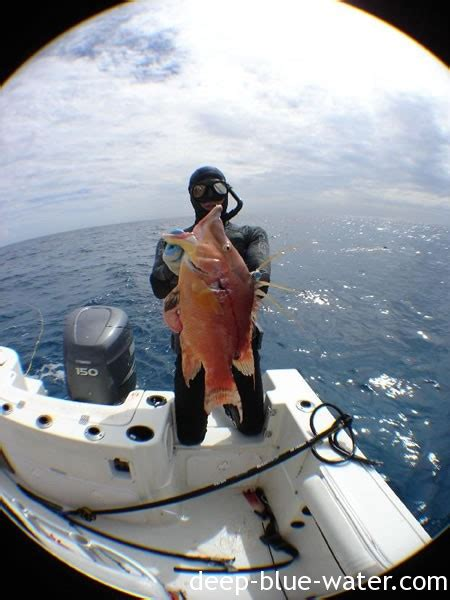best spearfishing boat names best catches deep blue water spearfishing