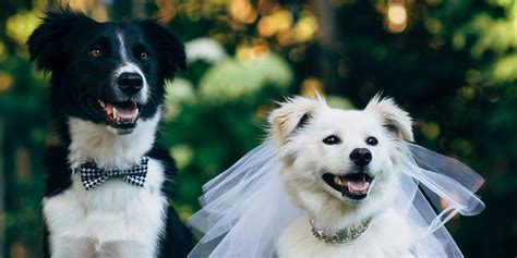 puppy wedding these friends made their official in the cutest canine wedding ceremony