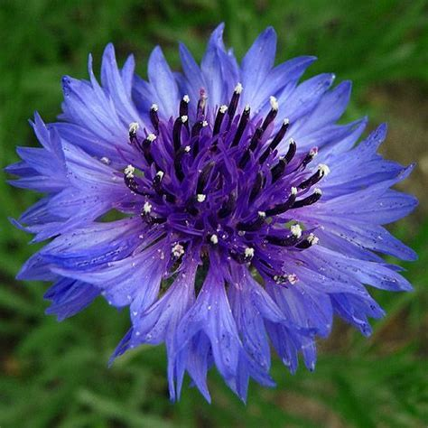 blue flowers names and pictures purple blue flower identification guide exotic flower names