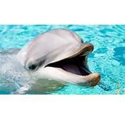 Image Gallery Imagenes De Animales Bonitos