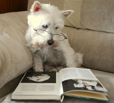 cutest puppies book dogs with books dogs reading dogs books