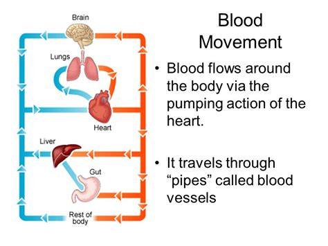 on the motion of the and blood in animals books works circulation excretion and the skeleton ppt