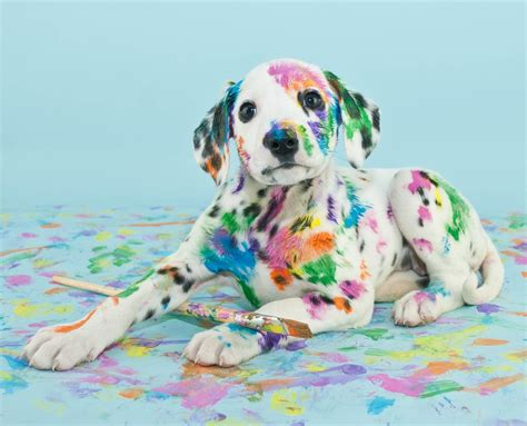 puppy paint 5 tips for a chic pet friendly home