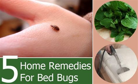5 bed bugs home remedies treatments cure