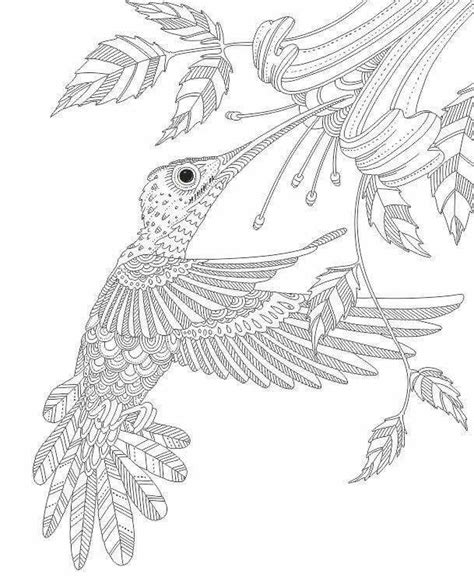 advanced dolphin coloring pages 42 best images about dolphin on pinterest