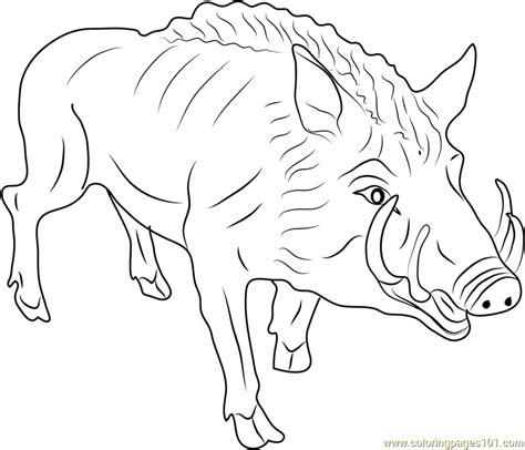 eurasia coloring page eurasian wild pig coloring page free boar coloring pages