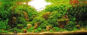 Bamboo Aquascape Mundo De Rocas Cuanto Y Qu 233 Tipo De Sustrato Utilizar
