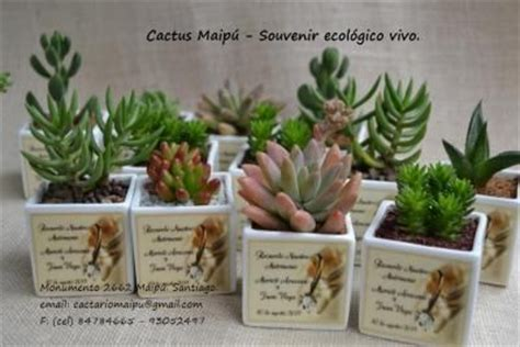 souvenirs cactus maipu recuerdos de matrimonio en ceramica blanca cactus maip 218 productos cactus o suculentas para