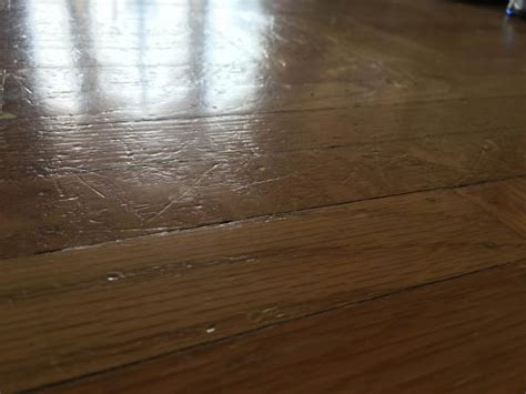 dogs and hardwood floors scratches from my big on hardwood floor what should i do doityourself