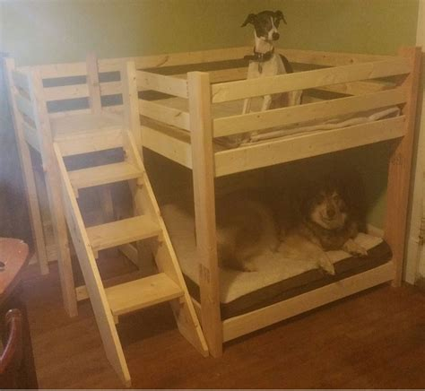 Bunk Bed For Dogs Best 25 Bunk Beds Ideas On Pinterest Beds Rooms And Diy Treats