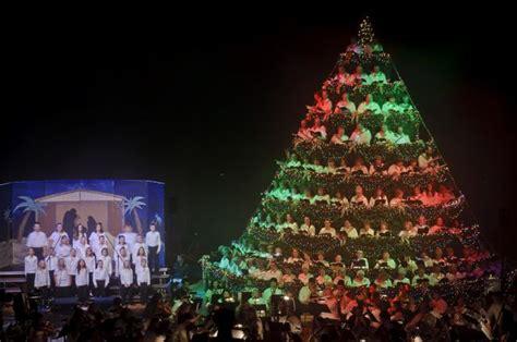 aberdeen s living christmas tree