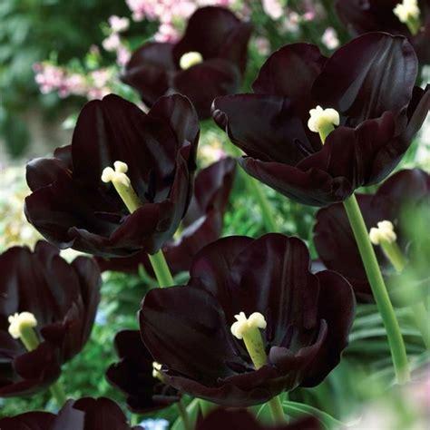 imagenes raras oscuras las inusuales y raras flores negras plantas