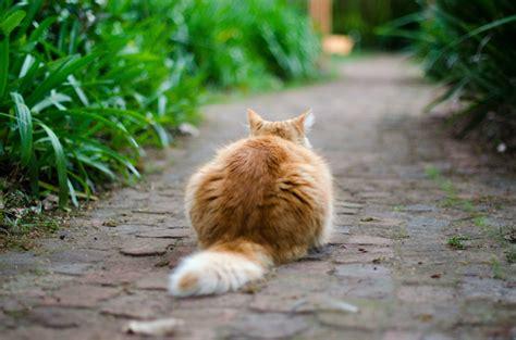 alimentazione gatto castrato alimentazione archivi clinica veterinaria neptunia