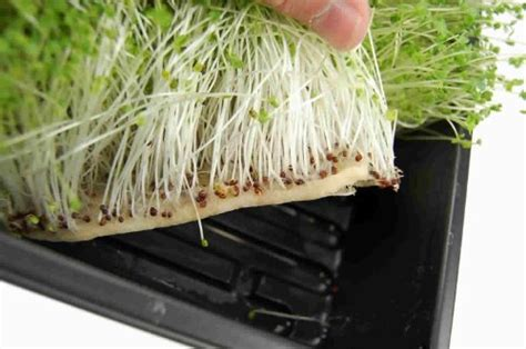 Growing Mats by Micro Mats Hydroponic Grow Pads For Organic Production 50 Pack Plant Seed Germination