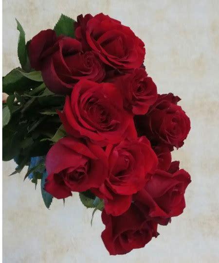 fiore rosa rossa rosa rossa fiori a fermo consegna a domicilio