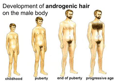 photos of male pubic hair during puberty how to confront the terrifying arrival of puberty the