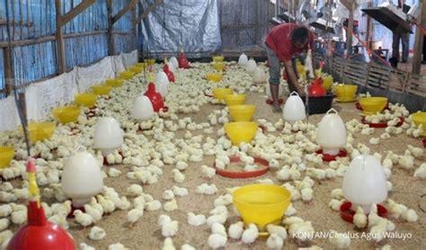 Ayam Broiler Pokphand cpin targetkan produksi pakan dan doc naik 8