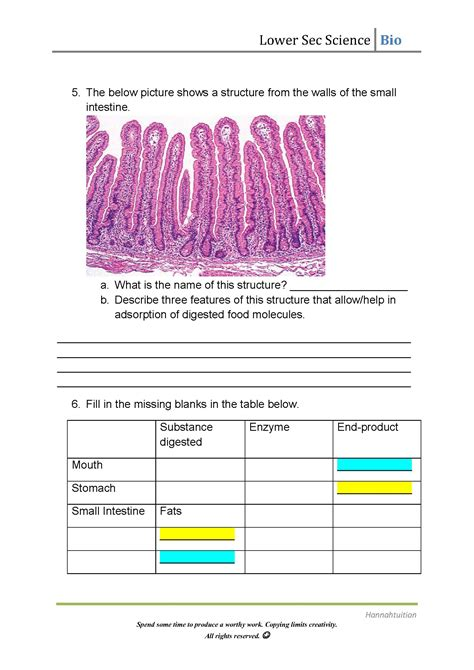 Enzymes Worksheet by Digestive Enzymes Worksheet Answers The Best And Most