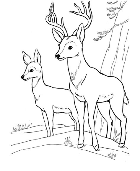 winter deer coloring page free printable deer coloring pages for kids