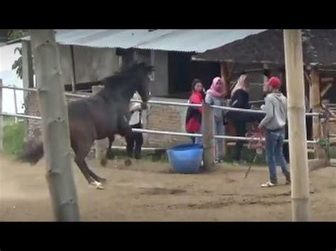 Sho Kuda Malang peternakan kuda megastar indonesia batu malang