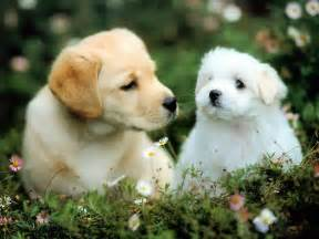 Cute Dogs Wallpapers wallpaperfreeks hd cute dogs wallpapers 1600x1200