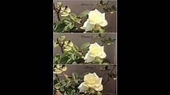 iPhone 7 vs 6 vs 5S Camera comparison