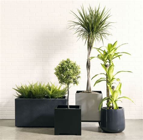 l to r  thomas rectangle planter alora cube planter .