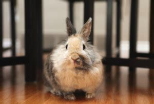 [click]12 Top Ways To Keep Your Rabbit Healthy Well Contented