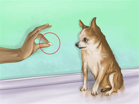 [click]3 Easy Ways To House Train Your Dog With Pictures - Wikihow.