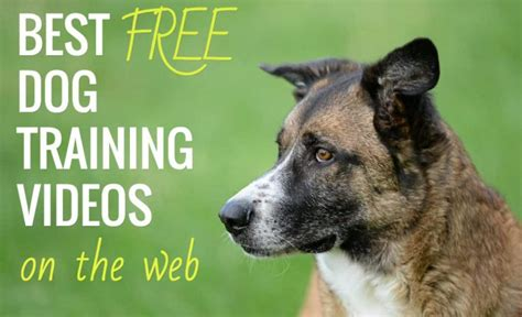 @ 6 Best Free Online Dog Training Video Courses Tips From .