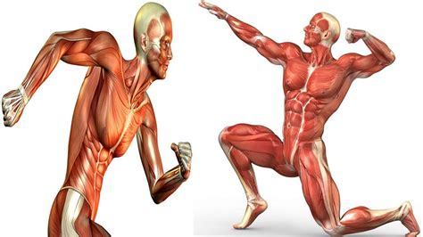 7 Benefits Of Strength Training That Go Beyond Building Muscle.