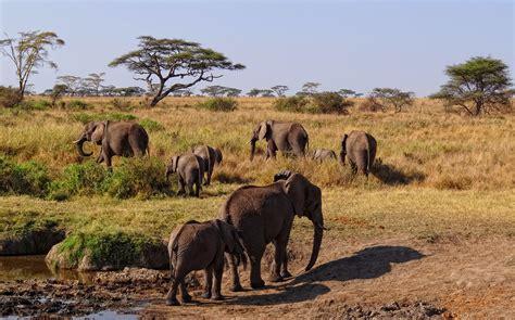 African Serengeti