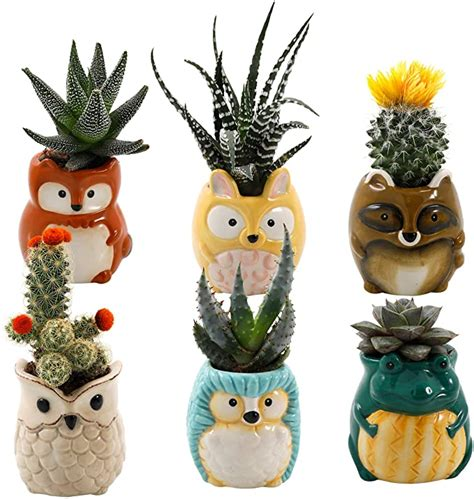 Amazon Com Outdoor Succulent Plants.