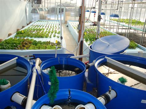 Aquaponics, A Gardening System Using Fish And Circulating Water.