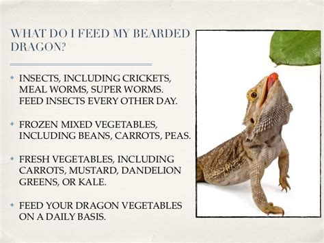 [pdf] Bearded Dragons - Care Sheet