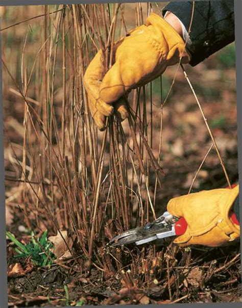 @ Beehives For Beginners - Florence Grovida Gardening.