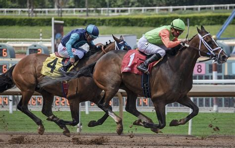Best Horse Racing Tips From Probet - The Best Tipster Service In.