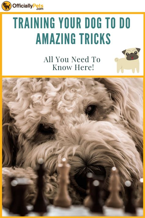 Brain Training For Dogs Review - Analysed By A Certified Dog Trainer!.