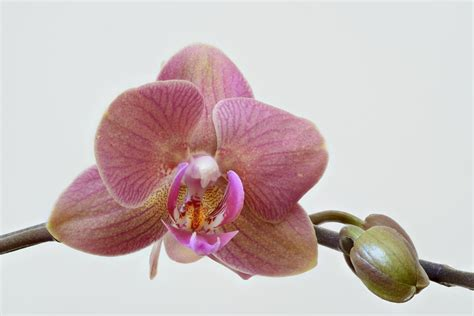 Broad Scale Phylogeny Of Orchids Reveals Secrets Of Their Diversity.