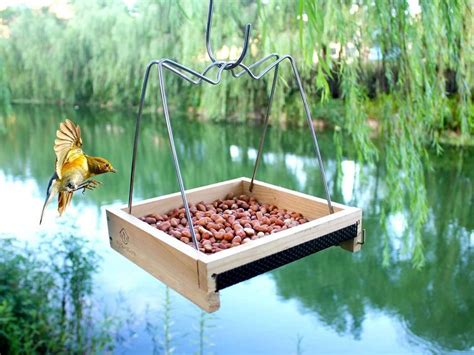 Care For Bird Feeders