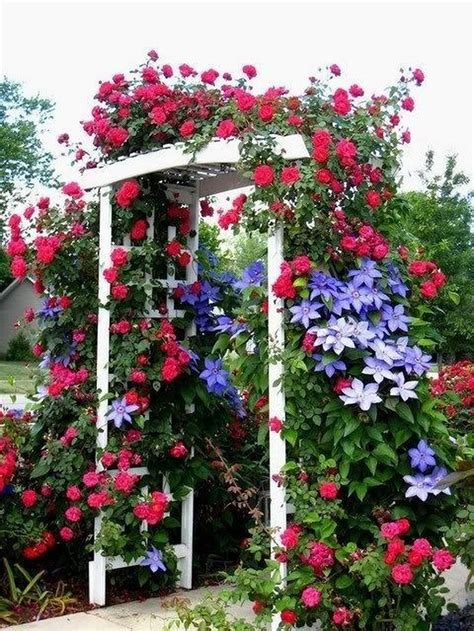 Clematis And Climbing Roses On A Trellis