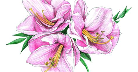 [pdf] Color Pencil Drawing Course - Chicago Botanic Garden.