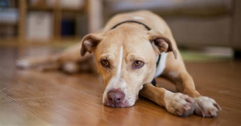 Common Dog Behavior Issues Aspca.