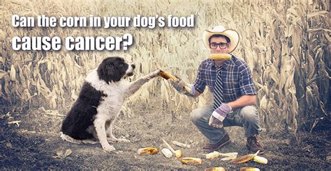 Corn And Dog Food: Aflatoxins And Mycotoxins - Dogs Naturally.