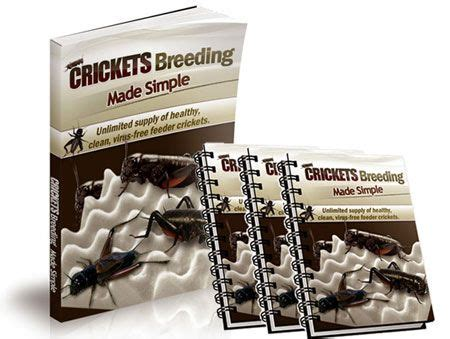 [click]crickets Breeding Made Simple - Easiest Way To Breed