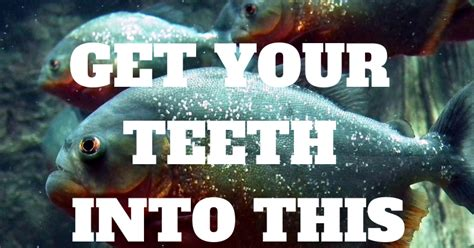 [click]defy The Odds   Professional Horse Racing Tips By .