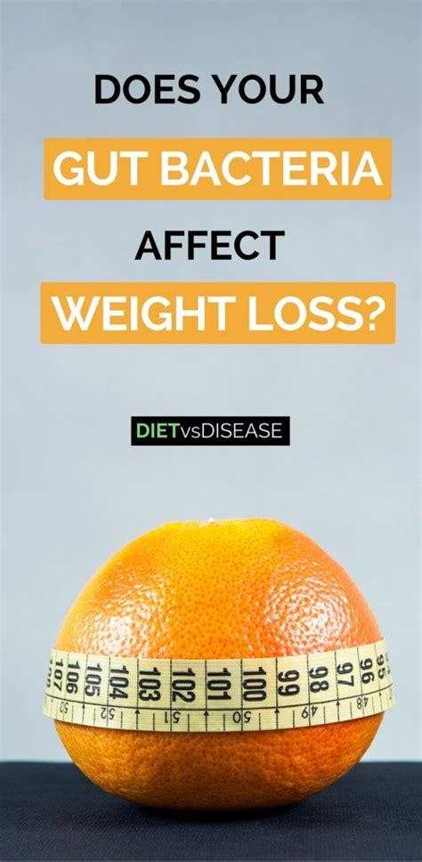 [click]does Your Gut Bacteria Affect Weight Loss Simplifying The .